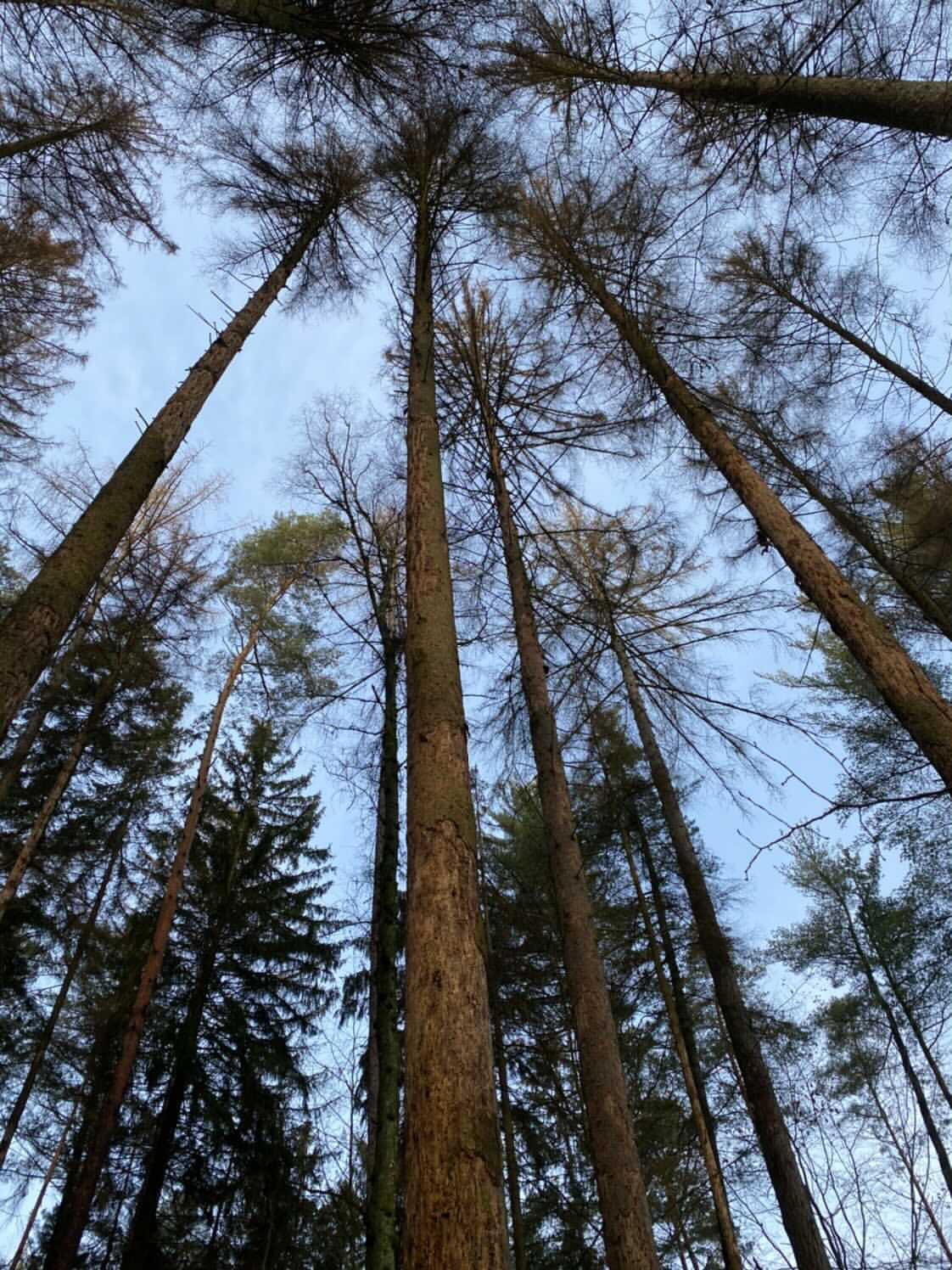 WaldsterbenflcTjMcaA2Okg