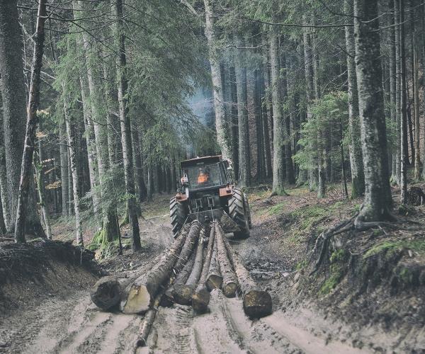 Bild-Forstwindenseil
